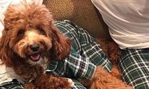 Одевайтесь одинаково! Со своей собакой