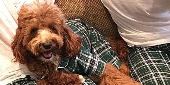 Одежда для собаки и человека